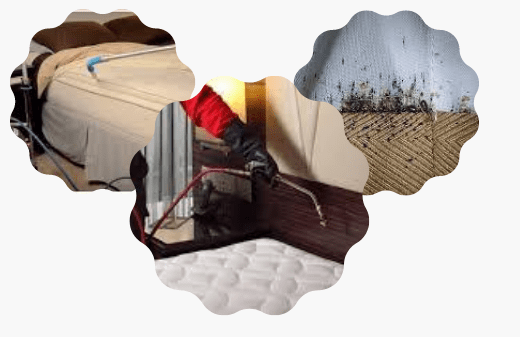 Bed Bugs Control Service In Randwick